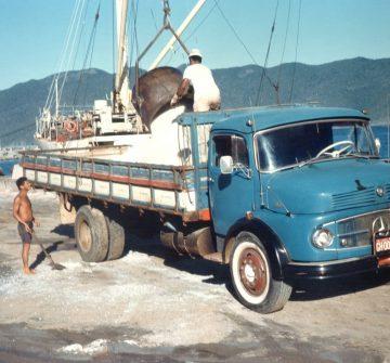 Fenemê, Jacaré ou Muriçoca: qual o maior caminhão clássico das estradas brasileiras?